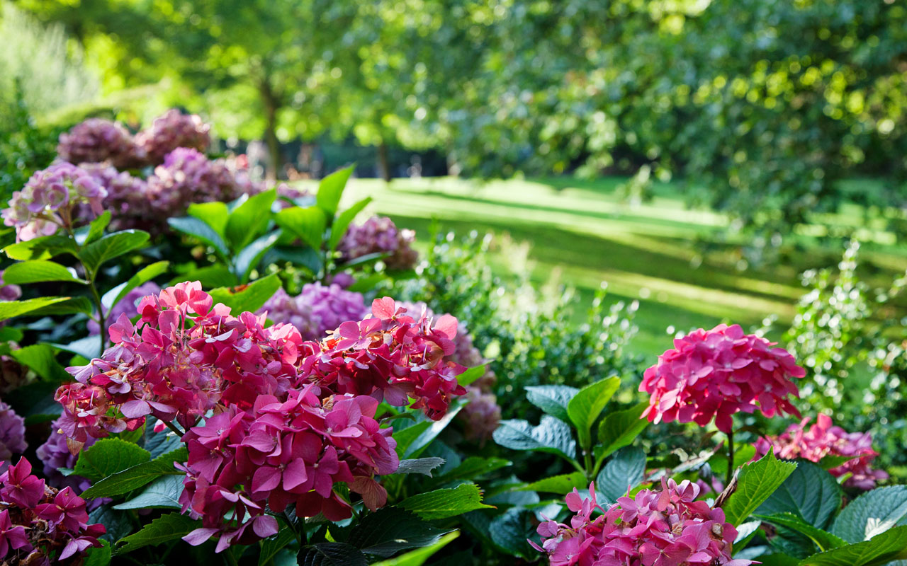 Soft Landscaping Bromley